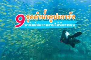 9 จุดดำน้ำดูปะการัง ชมความงามใต้ท้องทะเล