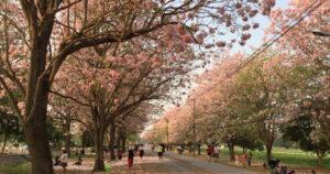 5 พิกัดชมดอกไม้ เดินชิล ชมวิว ถ่ายรูปสวย